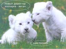 Lions_1198_SmallRes
